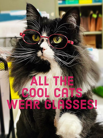Truffles, a black and white cat, wearing pink glasses. Text reads: All the cool cats wear glasses