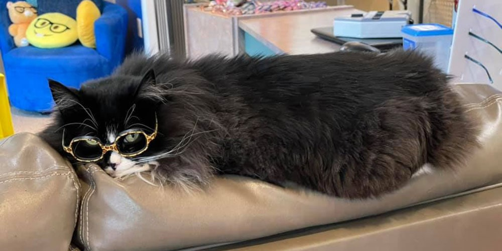 Truffles, a black and white cat, lying on the back of a sofa wearing yellow glasses