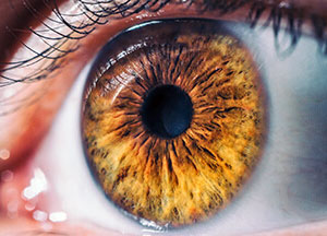 What's a Retina, Assil Eye Institute